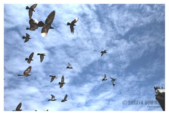 Pigeons flying towardsTemple Roof, Blue Skies Nature Wildlife Landscape Photography Fine Art Giclee Print 8x10 8x12 11x14 12x18 16x20 16x24 on Etsy, Sold