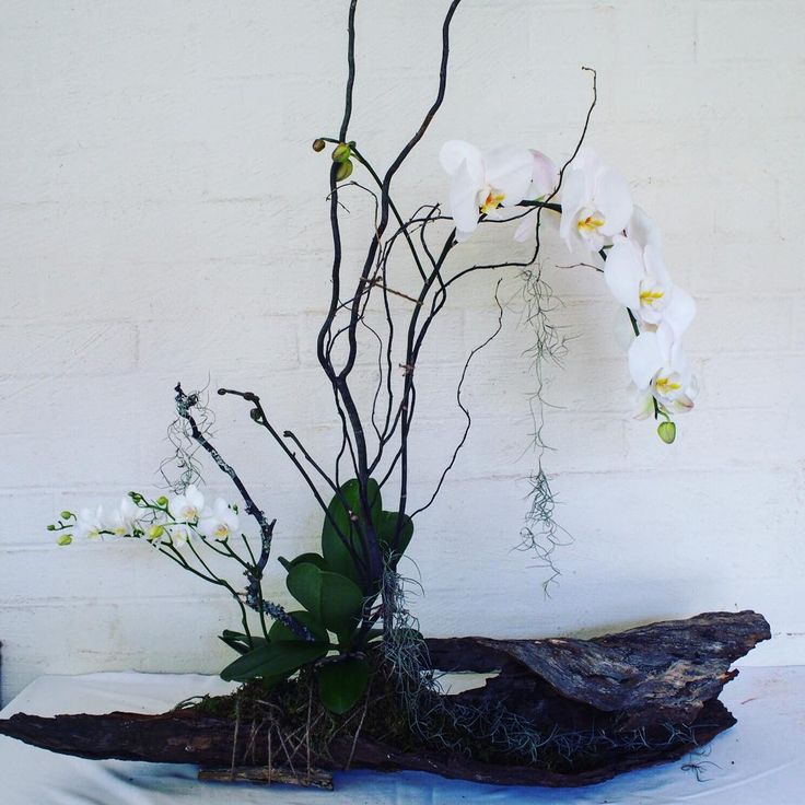 """Bloodwood Botanica 