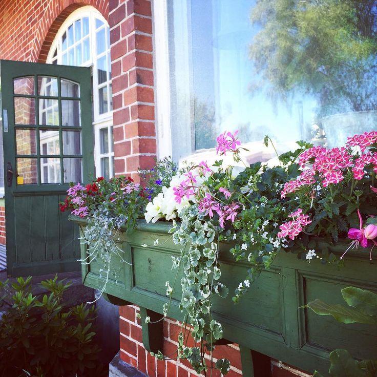 Satte mig under parasollet och skrev lite på bloggen...💚 Fast bilden har inget med det att göra.☺️Fortsatt fin nationaldag.🇸🇪☀️ #nyttpåbloggen #balkonglåda #blommor #trädgård #garden #flowers