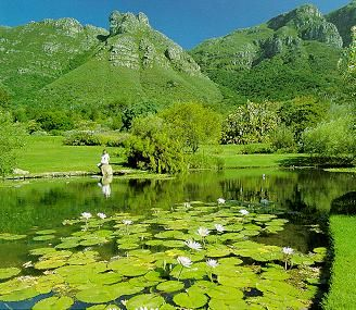 Google Image Result for http://www.thecomputer.co.za/Pics/kirstenbosch1.jpg