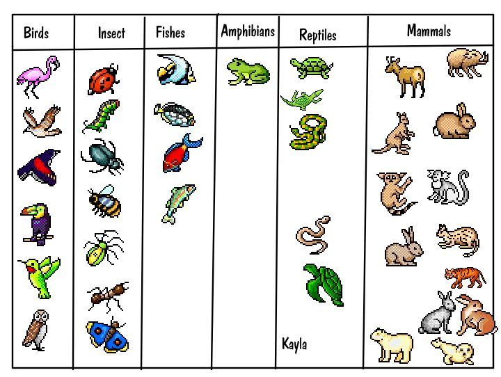 Basic Animal Classification For Kids Print For First