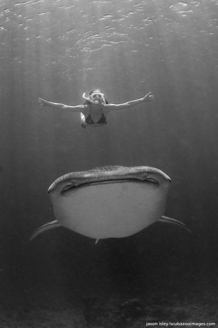 free diving with the sea's gentle giant