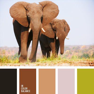 color de África, color de las praderas, color gris elefante, color gris pardusco, color piel de elefante, color pradera, color sabana, color verde hierba, combinaciones de colores, elección del color, marrón grisáceo, selección de colores para el diseño, tonos marrones, verde oliva.