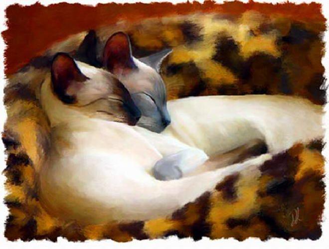 Sleeping Siamese  Denise Laurent