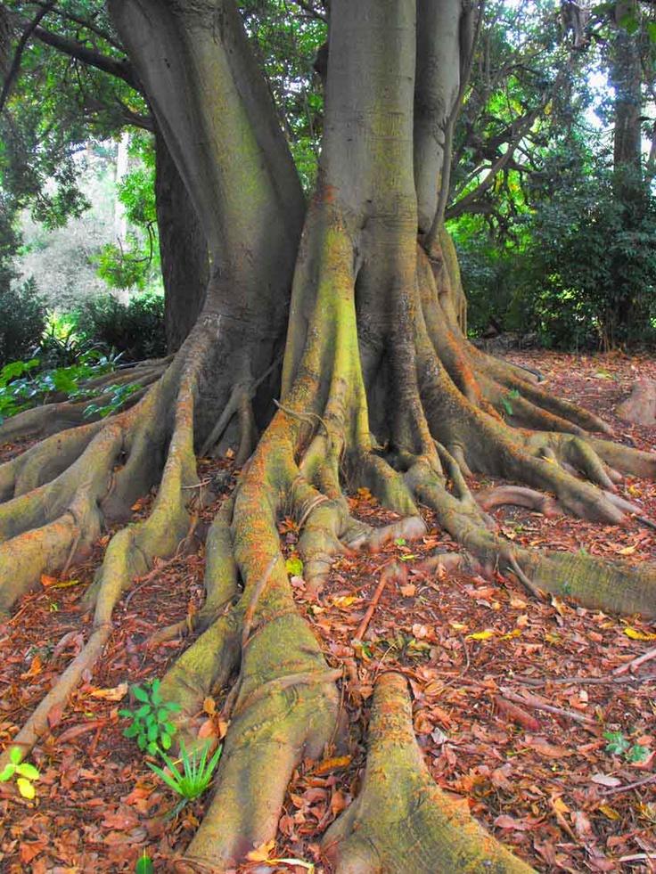 If trees could talk.. Royal Botanic Gardens, Melbourne