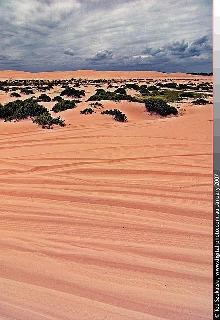 Port Stephens - Stockton Bight Sand Dunes