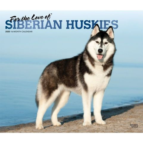 Jeffco Calendar 2020-16 For The Love of Siberian Huskies 2020 Calendar. A native of