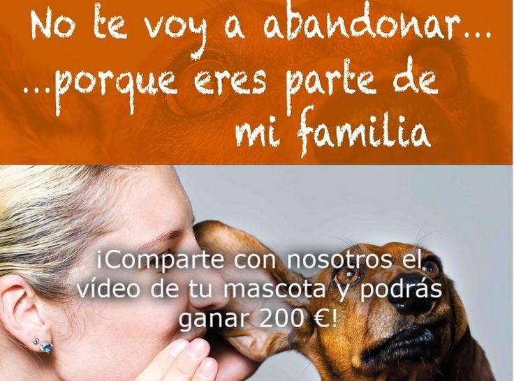Concurso videos mascotas 2014