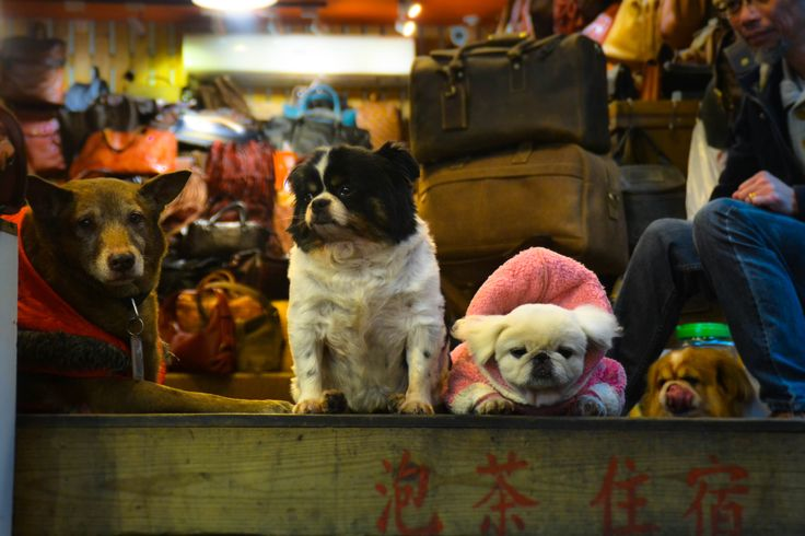 Cute Dogs of Taiwan. Very well dressed dogs!