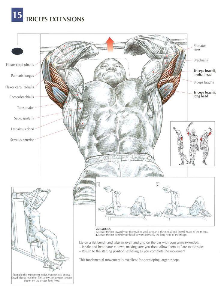 mejores 12 im u00e1genes de circuito espalda  hombro y triceps