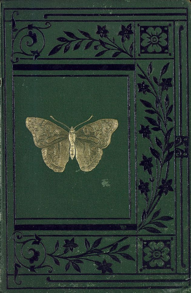 Sketches of British Insects...Rev.W.Houghton 1888