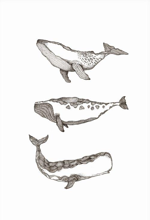 baleines                                                                                                                                                                                 Plus