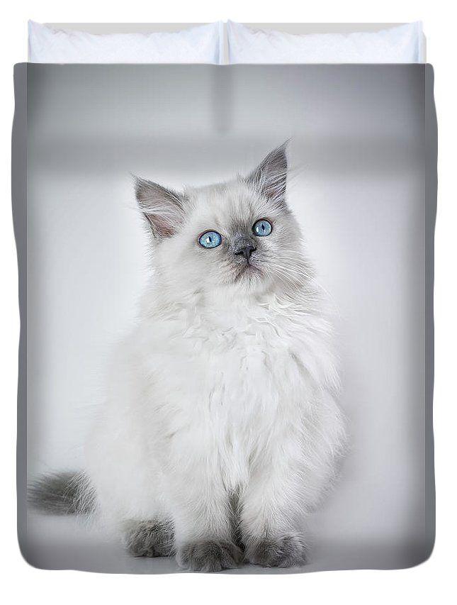 Kitten Portrait Duvet Cover by Larysa Koryakina