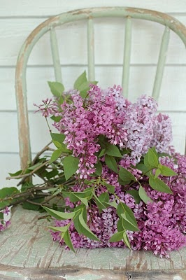 lilacs . . .spring flowers