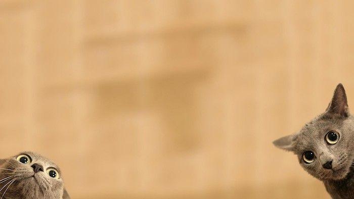 1001 Images Pour Un Fond D Ecran Drole Qui Va Lever Votre Humeur En 2020 Fond D Ecran Chat Fond D Ecran Mignon Chat Fond Ecran Drole