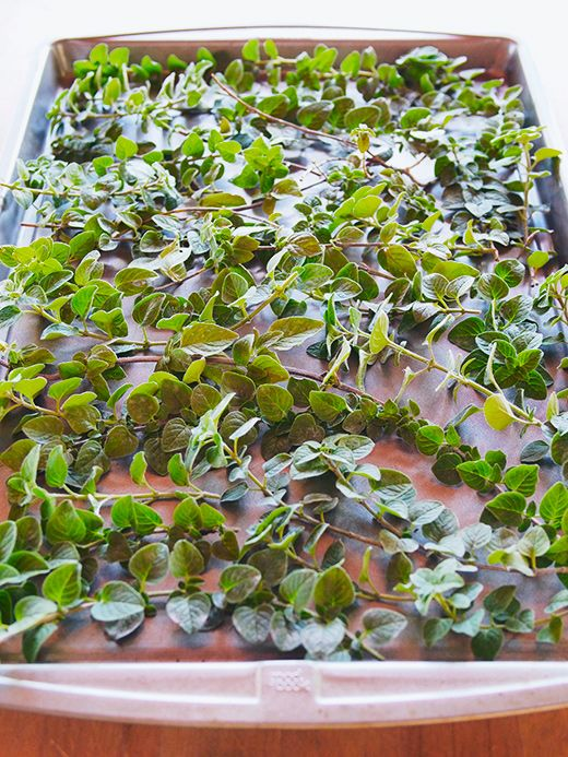 Quick-Drying Oregano (and Other Herbs) in the Oven | Garden Betty