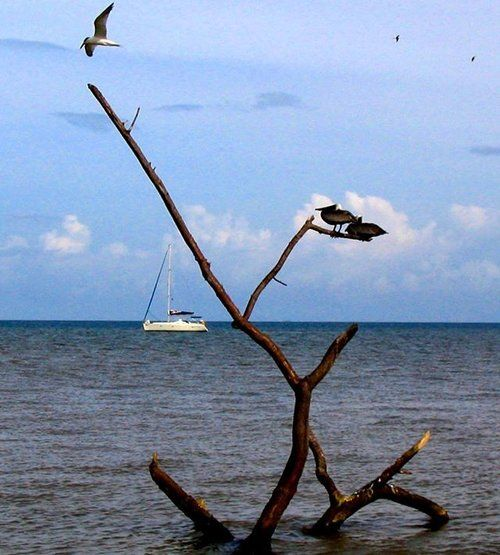 It's always a good idea to take a moment and enjoy the view... #Belize #Travel #travelbelize #dangriga #pelican #driftwood #tern #birding #waves #caribbeanislands #Caribbean #island #barrierreef #reef #sailing #sail #sailboat #vacation #beach #ecotourism #wanderlust #wanderlustwednesday #relax