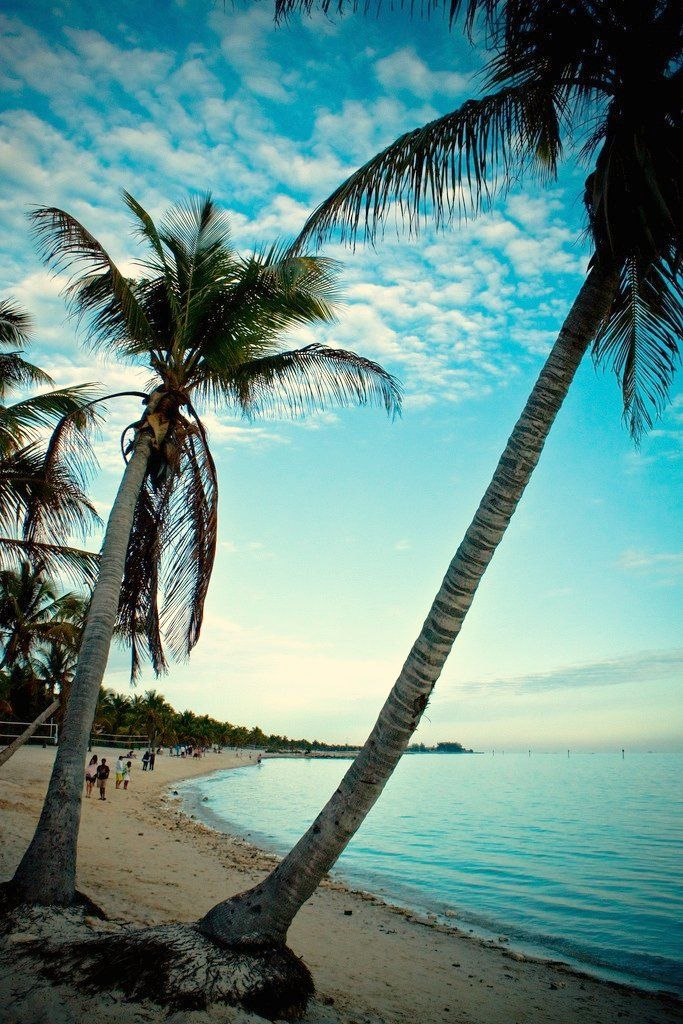 Palm trees at sunset. Key West, Florida.Beautiful Keys, Dreams, Beautiful Places, Palms Trees, Keys West, Beach, Key West, Paradise, Keywest Florida