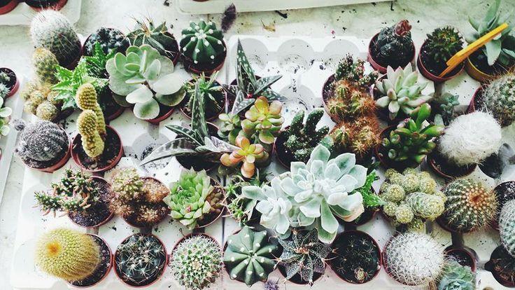 cactus choice