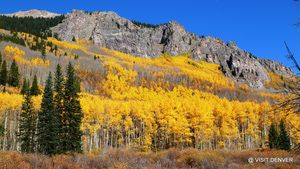 Colorado Fall Foliage Map + map of scenic drives
