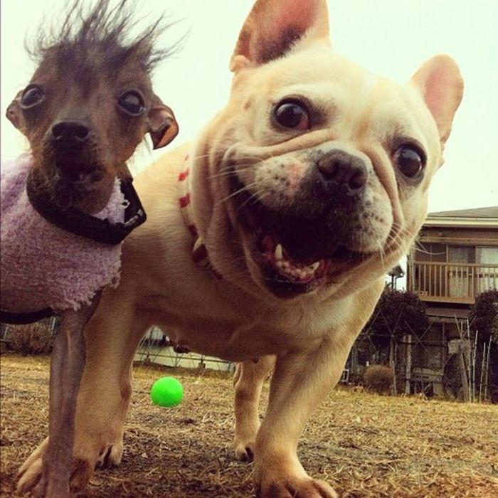 Картинки о смешных собаках
