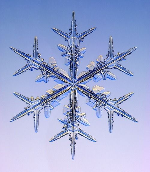 snowflake pictures | Christmas Real Snowflakes!