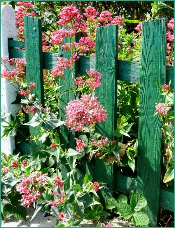 Green Picket Fence Flowers Green Fence By Lua P Rpura
