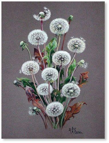 Dandelions watercolor by Natalia Zabolotskaya |  ПРЕЛЕСТНЫЕ АКВАРЕЛИ НАТАЛЬИ ЗАБОЛОЦКОЙ