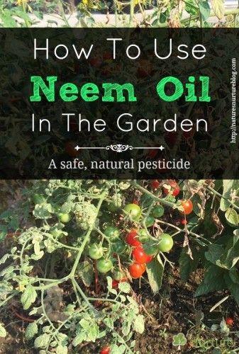 Neem Oil In The Garden