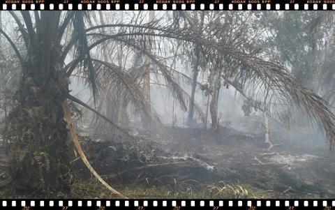 Api Kembali Lahap Kebun Warga di Siak Kecil - Amanah Anak Negeri