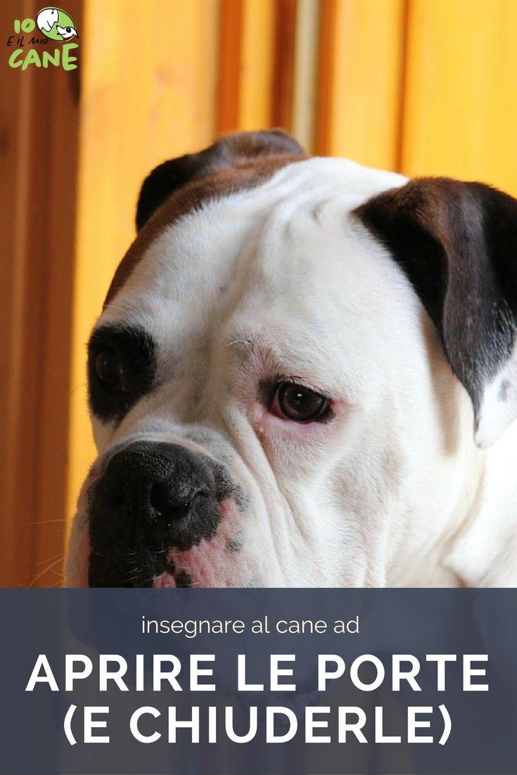 Vuoi insegnare al tuo cane ad aprire e chiudere una porta (magari quella del frigo)?