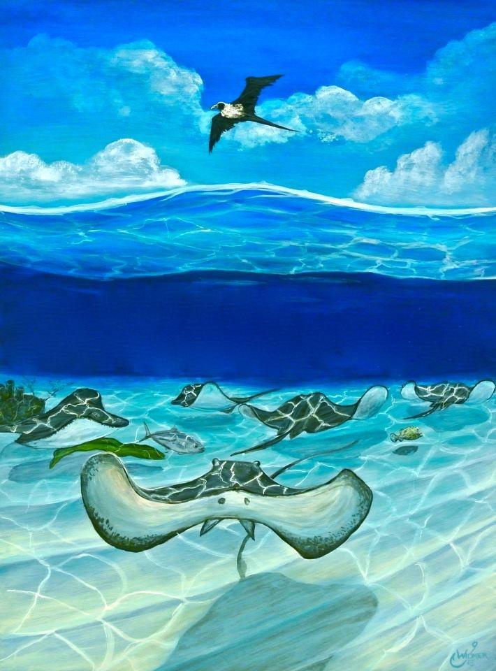 Sunday Stingrays- Johnny Widmer Art  Visit: https://www.facebook.com/JohnnyWidmerArt
