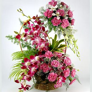 PRETTY LADY A big basket with two layers of assorted carnations and #orchids. Send this now!!   These pretty pink carnations combined with wisps of greens and purple orchids is a sure lady pleaser.    This product delivers only in MUMBAI VASHI THANE