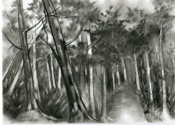 The path through the forest Charcoal on paper. qusays.alkhateeb.se