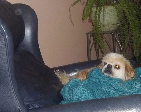 Dusty watching an orb- Can animals really see spirits? Paranormal Polls