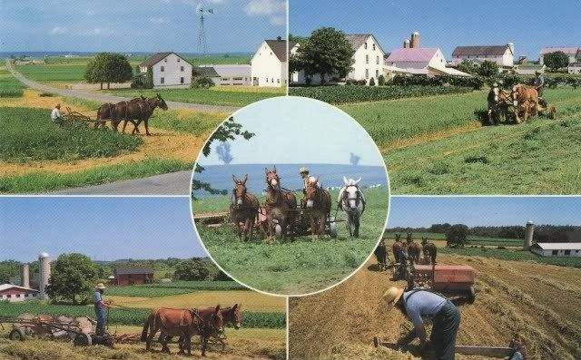Homesteading: The Old and New, Then and Now