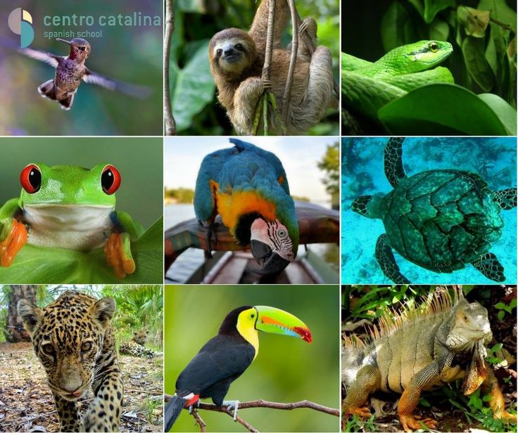 What's your favorite Colombian animal?