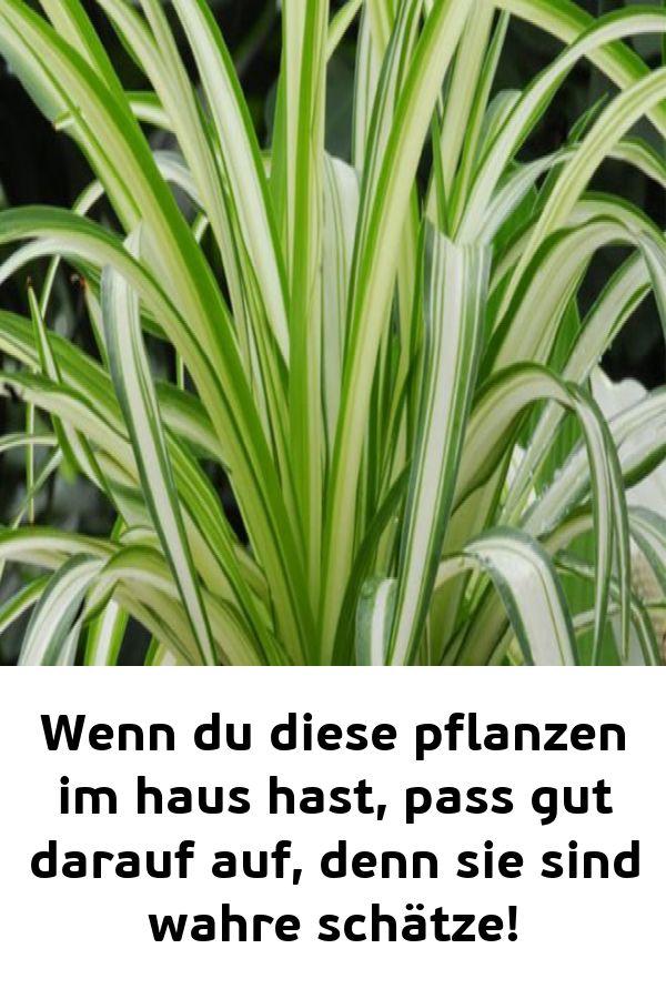 Wenn du diese pflanzen im haus hast pass gut darauf auf denn sie sind wahre schätze!