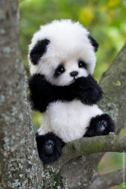 El bebé mas bello del mundo. Su carita tan pequeña y expresiva. Enamora