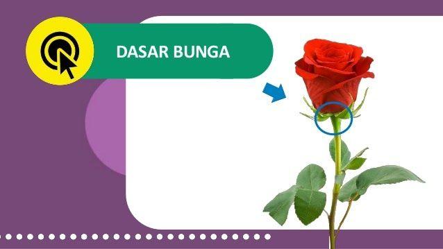 Terkeren 30 Foto Bunga Sempurna Bunga Jagung Termasuk Contoh Bunga Tidak Sempurna Karena Dalam Satu Pohon Terdapat Di 2020 Bunga Kembang Sepatu Bunga Kembang Sepatu