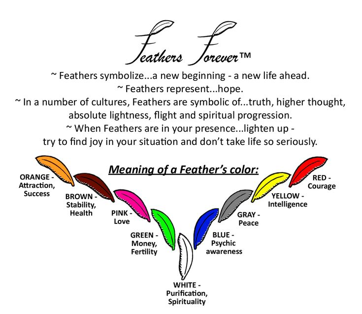 41 Meaning Of Black Feathers In Dreams In Meaning Of Feathers Black
