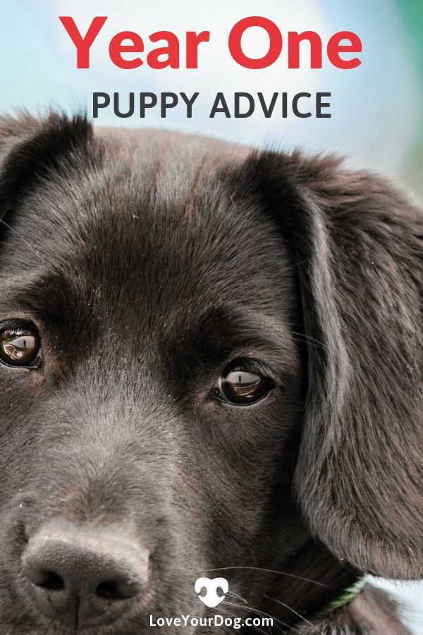 Your Puppy S First Year What To Expect Shots Vet Visits More
