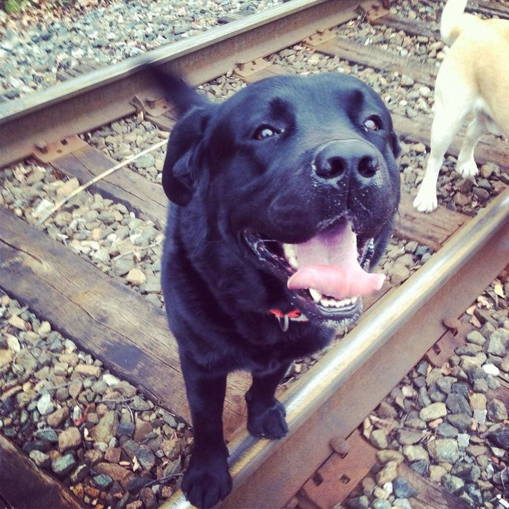 Carey Price's dog, Duke : )