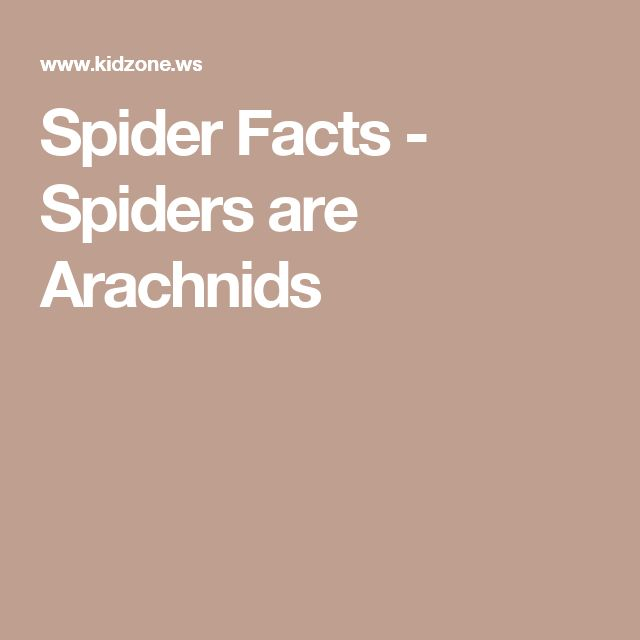 Spider Facts - Spiders are Arachnids