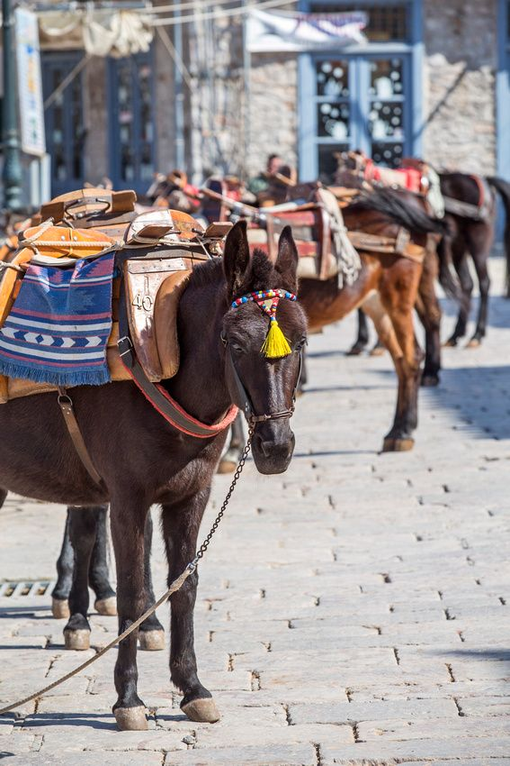 When you visit Hydra, you should seriously consider taking a donkey trek, even if just a short one around the town.
