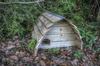 Hedgehog house...heehee