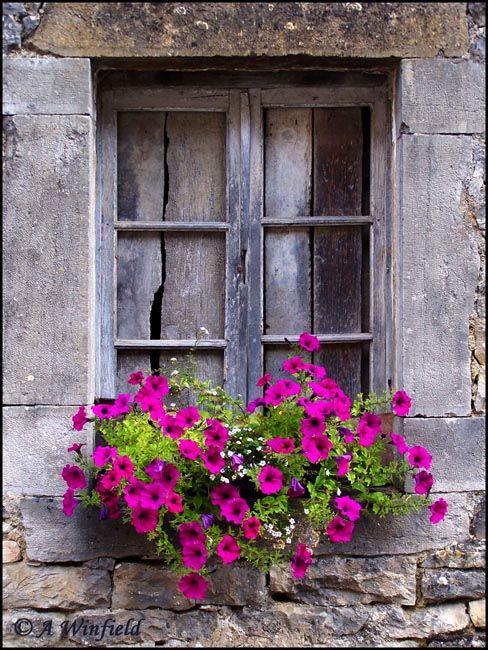 Petunia window box