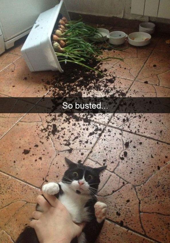 30+ Funny Snapchat Cats