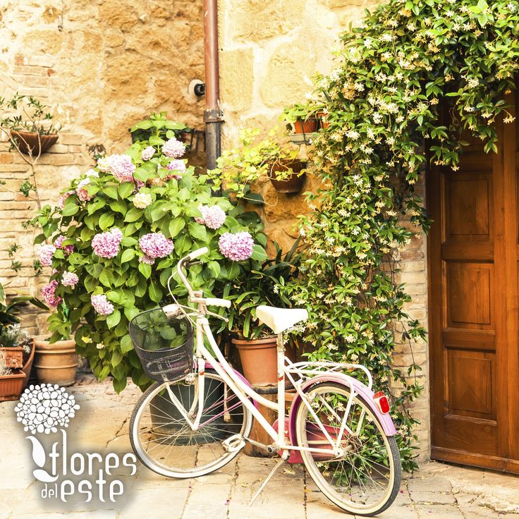 Our Farm #Tierradentro is located at La Ceja, Antioqiua. Here the #bycicle is the principal way of transport, it's a great way to know and enjoy the town.  🚲💐🏡 #FloresDelEste #Nature #Hydrangeas