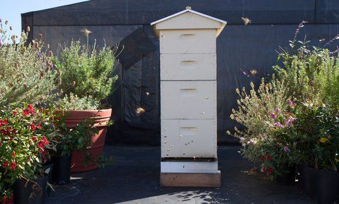 A Quick Guide to Starting a Beehive : TreeHugger